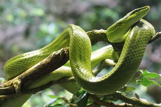 serpent sur un arbre
